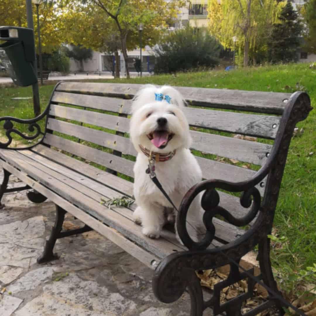 Αλέξανδρος Βλάχος, Εκπαιδευτής σκύλων Αθήνα Athens Dog Trainer